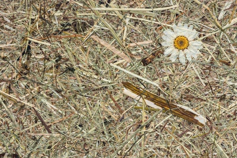 Wildspitze Margeritta